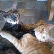 Gio e Tris, tutti abbracciosi