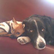Fox e Kimbra, inseparabili!