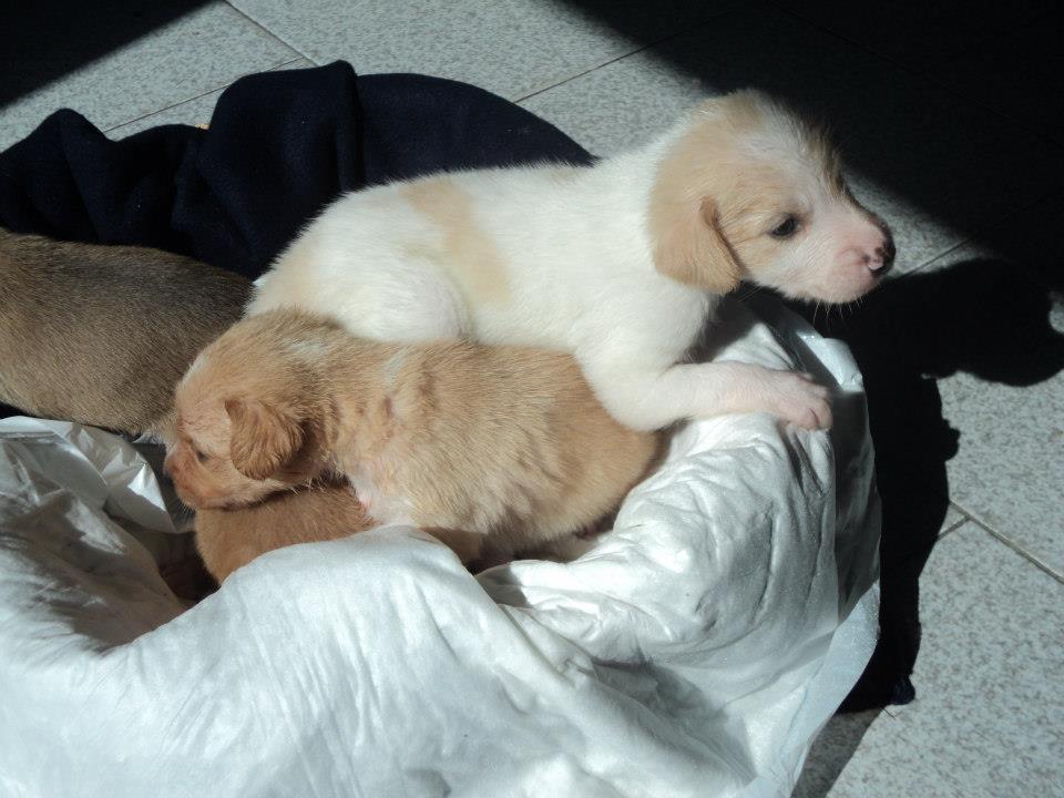 cerco una casa per questi 4 teneri cuccioli petpassion