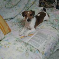Fry mentre studia