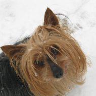 Frizzi tra la neve