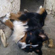 cucciolone :)