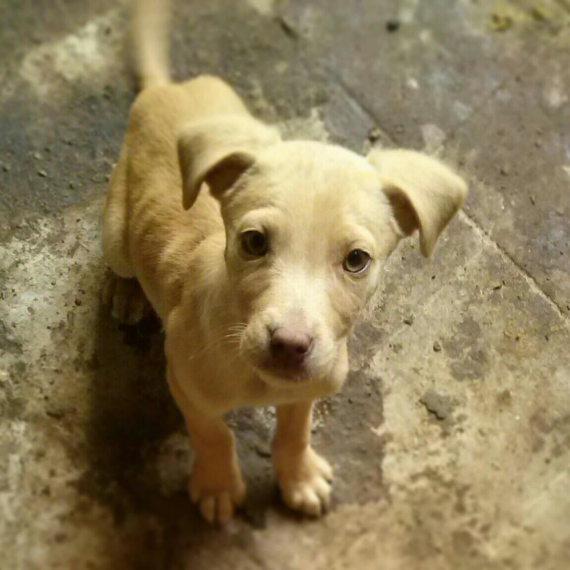 Regalo Cuccioli Di Cane Petpassion