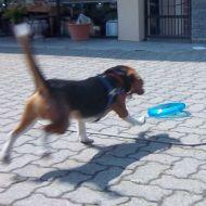 ..corri...corri..