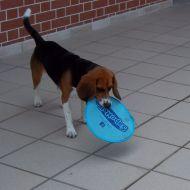 il mio cane
