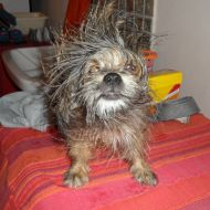 Rolly... dopo il bagno