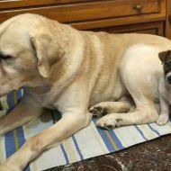 Il gigante ed il cucciolo