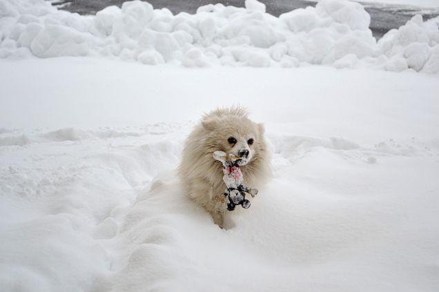 giocare sulla neve con topolino...è la mia passione!