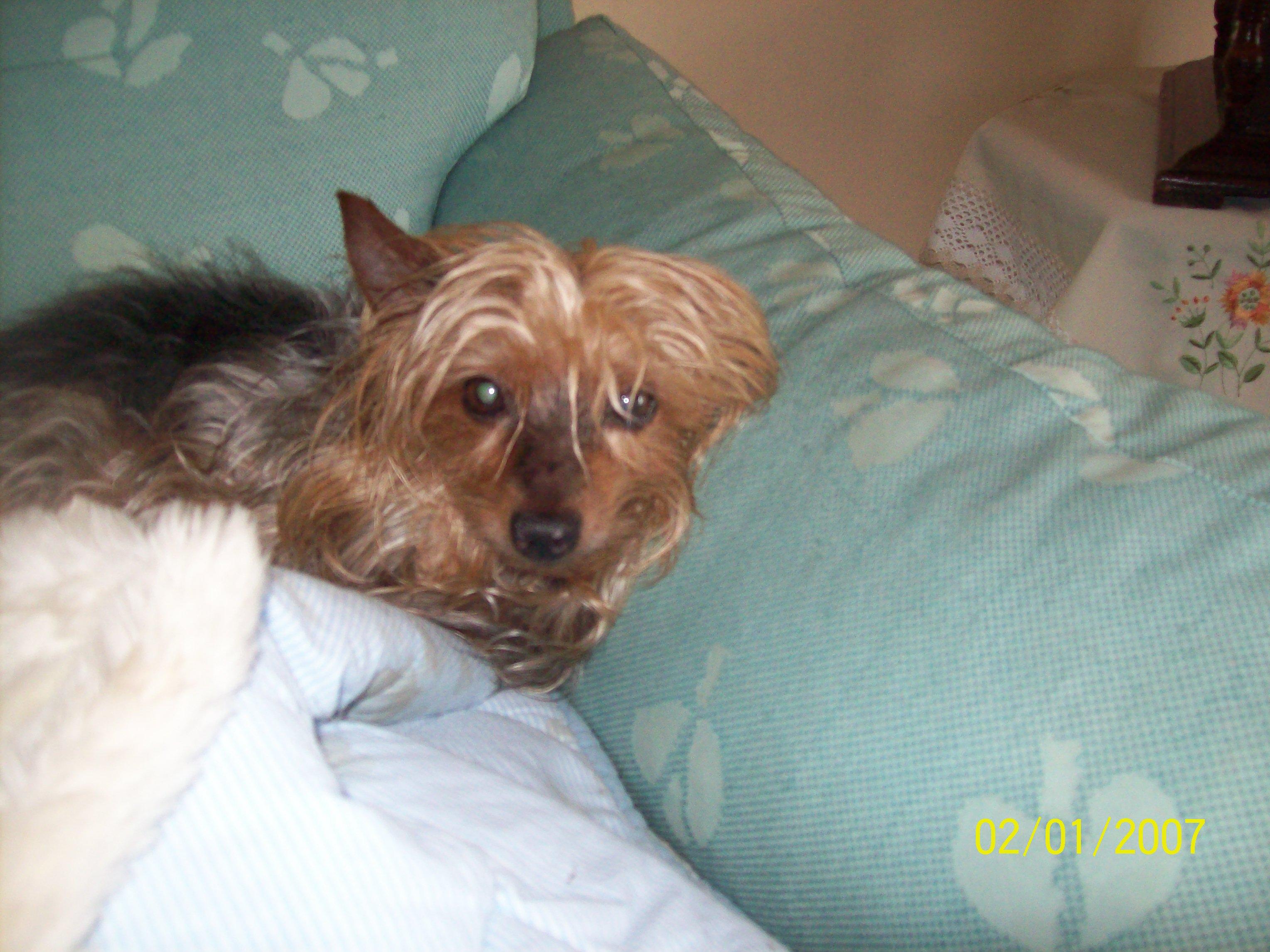 Cerco cane taglia piccola in regalo o a poco prezzo for Cerco tavolo in regalo