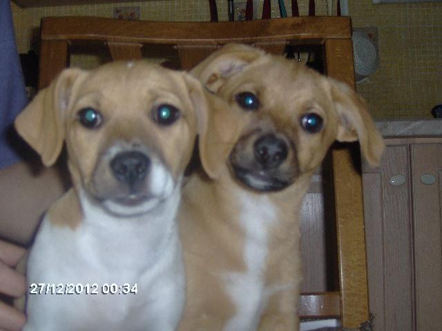 regalo 2 cagnolini | Petpassion