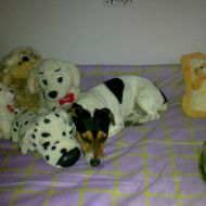 Jack e i suoi amici