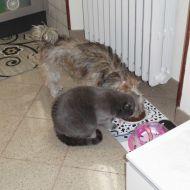 cane e gatto chi ha detto che non si può...