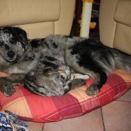 Astra & Oscar