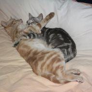 Oscar & Simba