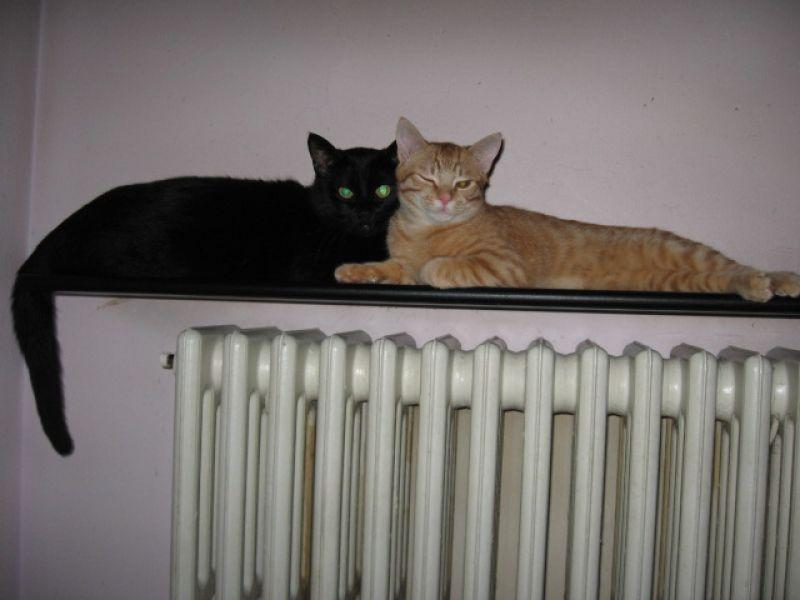 Cercasi 2 Gattini Uno Nero E Uno Rosso Entrambi Maschietti Petpassion