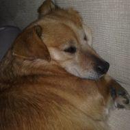 Riposino in divano dopo il bagnetto, soddisfatta! :)