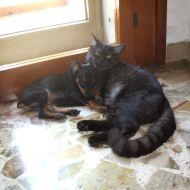 cane e gatto chi l'ha detto che non si può