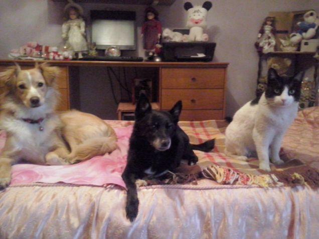 I miei 3 amori