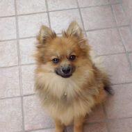 La mia piccola Laika