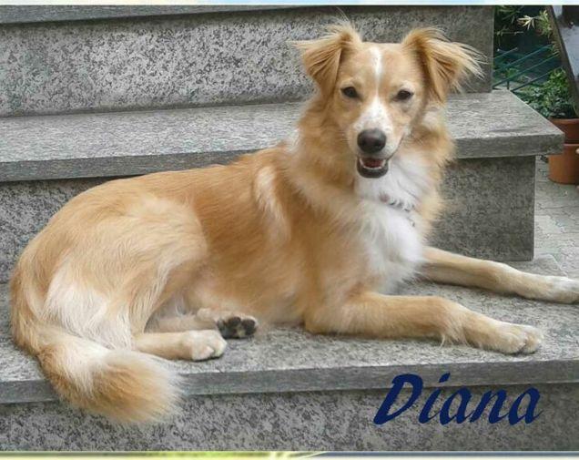 La mia piccola grande Diana