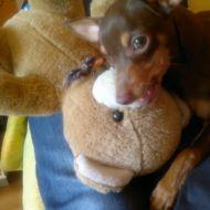 Io e Teddy