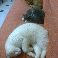 La dura vita dei gatti....