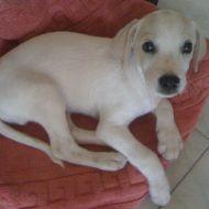 il mio amore da cucciolo!!