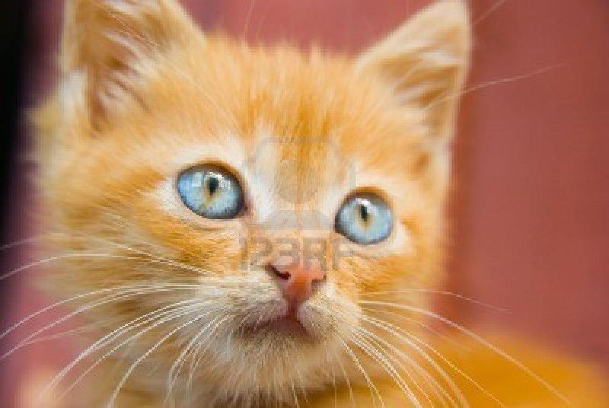 Nomi per gatti rossi e tigrati: più di 130 idee per ...