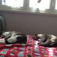 Sonno sincronizzato