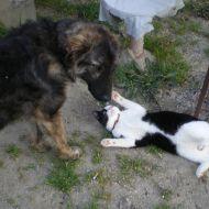 Vera amicizia tra cane e gatto  :)