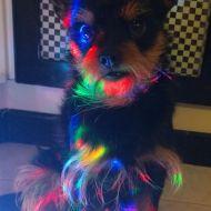 jack  colora la mia vita con  tutti colori dell'arcobaleno