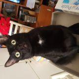 blackcat68