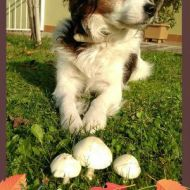 RASSEL e i funghi...