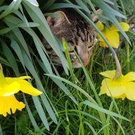 Nascondino gattofilo.
