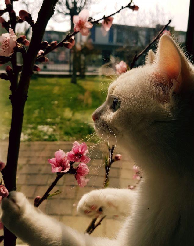 'Imita la primavera e vai verso di essa'