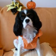 Sally - Halloween