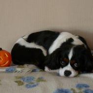 Sally  & la zucca di Halloween :)