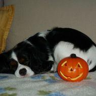 Sally e il pisolino con la zucca di Halloween :)
