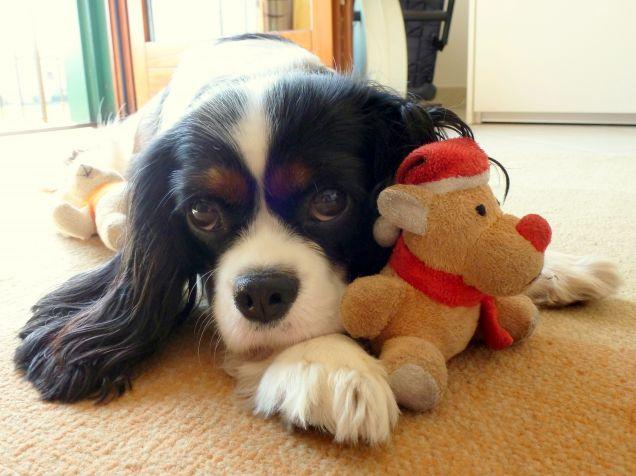 Sally & Pupiz