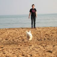 Se felice un cane vuoi fare, sulla sabbia fallo giocare!