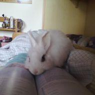 Non studiare... gioca con me!!