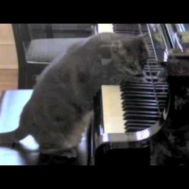 gatto nel pianoforte