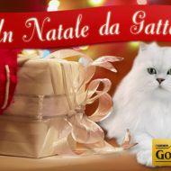 Un Natale da gatto