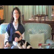 Alice e Maia: come scegliere il cane giusto!