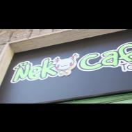 I gatti del Neko cat-caffè di Torino