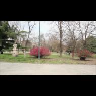 Un Bracco Ungherese al Parco a Milano
