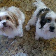 Molly e Milù