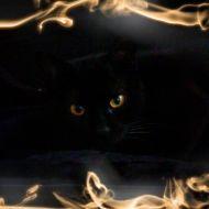 il mio gatto infernale