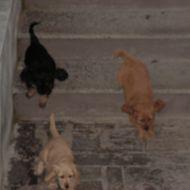 le mie tre cucciolotte a quattro zampe
