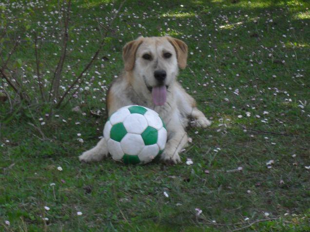 Tigro e la sua palla
